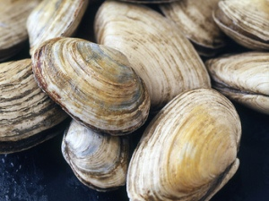 Sizzling_Clams_with_GarlicHerb_Butter-46716-frlay0em